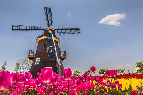 dutch-windmill-netherlands