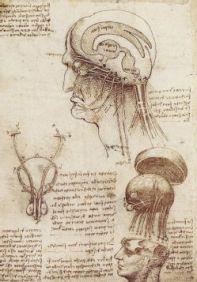 Leonardo_Da_Vinci's_Brain_Physiology