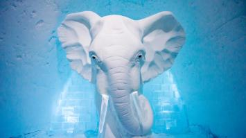 icehotel-art-suite-elephant-in-the-room-2016