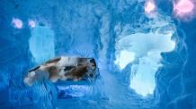 icehotel-art-suite-the-living-ocean